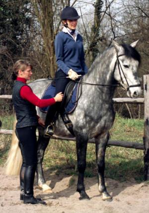 spring gymnastik fürs pferd